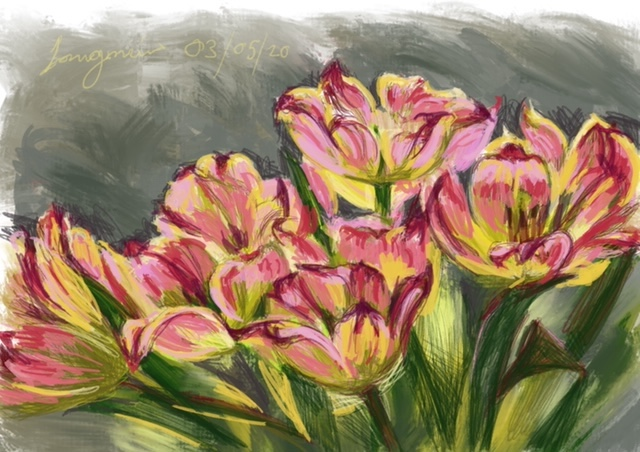 yellow pink tulips